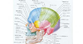 Wed 14 Jun '17: CBCT Interpretation – Normal Anatomy